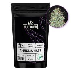 Hempower Seeds fem. Amnesia Haze 2pcs