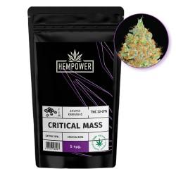 Hempower Seeds  fem. Critical Mass 5τμχ